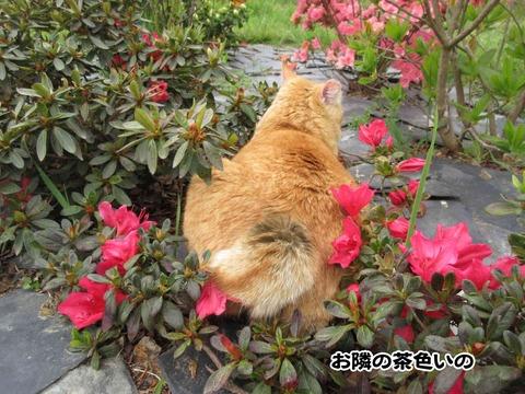 花と茶トラ 2