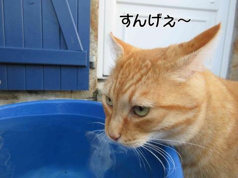 水飲み 5