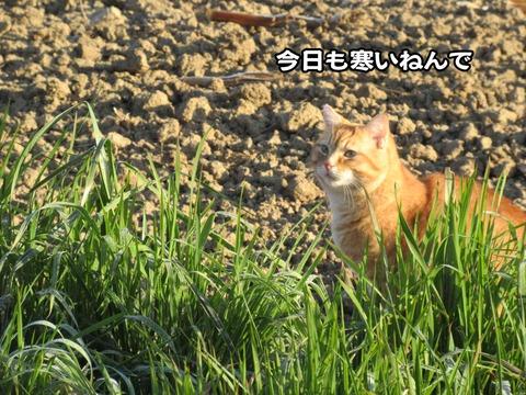 後ろの畑 5
