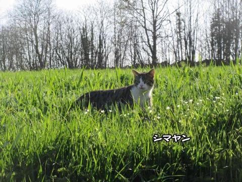 猫写真 2