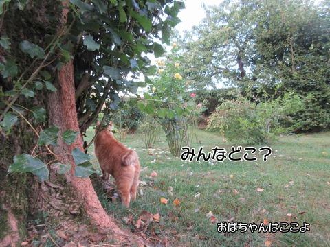 朝稽古 4
