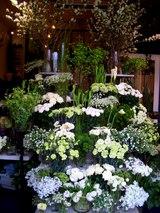 Jimmy Design Floral & AIZAWA