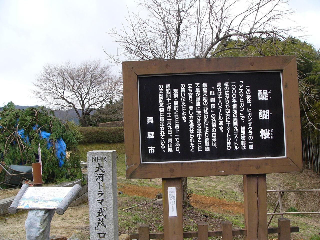 醍醐桜の碑