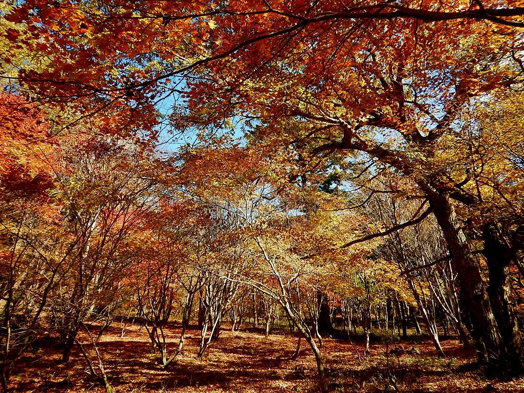 き 公園 森林 の もみ