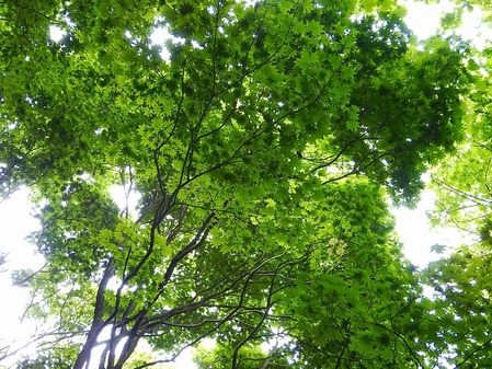 比婆山連峰の新緑