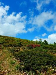 池ノ段へ (5)青空に向かって登る