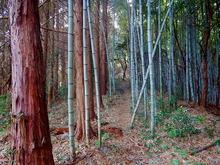 清々しい竹林