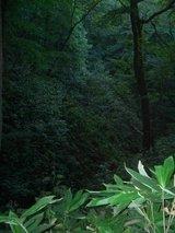 藻岩山・森