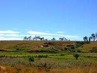 マダガスカルの田んぼ風景