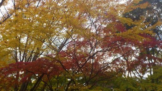 駒場野公園の紅葉