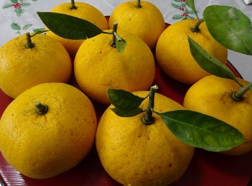 今年は甘夏みかんが8個収穫できました。