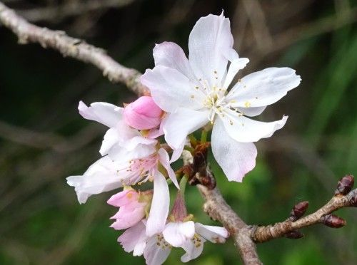皇居東御苑の花