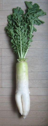 家庭菜園で育てた卑猥な形の大根