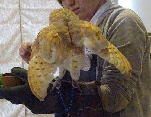 吉祥寺のカフェ フクロウの里 餌やり