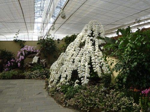 ハーブ庭園の温室