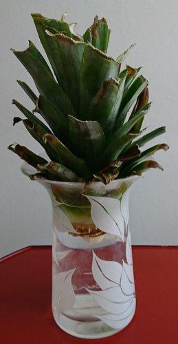 水栽培にトライ中のパイナップルのヘタから根が生えてきました。