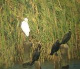 東京港野鳥公園の野鳥 画像