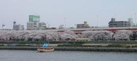 墨田川の両岸の桜と屋形船