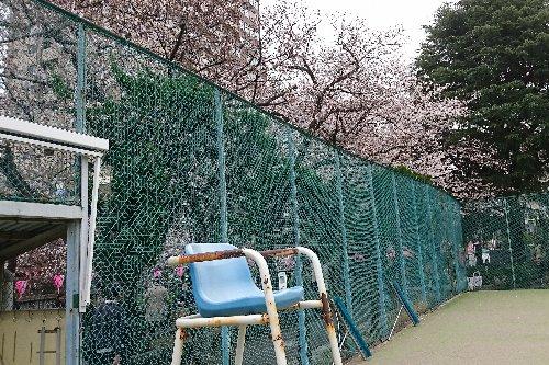 目黒区民センターのテニスコート横の目黒川の桜がきれいでした
