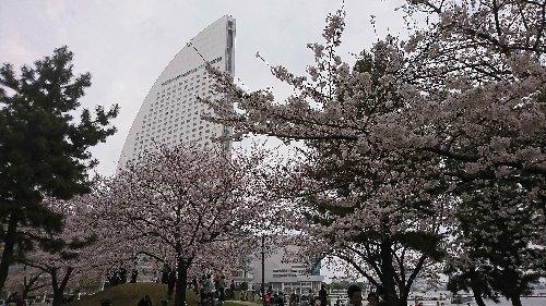 横浜の赤レンガ倉庫 クラフト展、桜