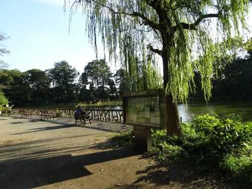 台風24号の強風で多数の大木が根元から倒木の写真。善福寺公園