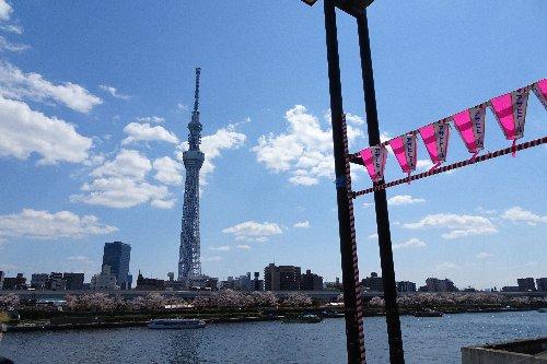 押上のスカイツリーから、向島芸者さんの「芸妓茶屋」、浅草の浅草寺までの散歩