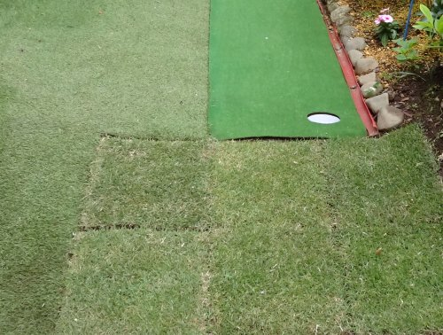 アプローチ練習用に庭に姫高麗芝を敷いてみました
