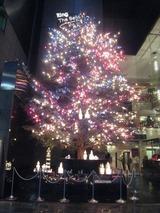 御木本のクリスマスツリー