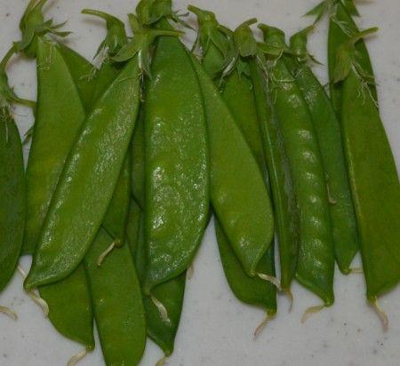 ベランダ菜園のサヤエンドウの収穫