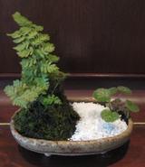 陶芸作品 植木鉢とミニ盆栽