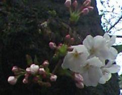 sakuramiyamae