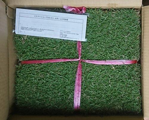 庭でアプローチの自然芝での打感の練習ができるように姫高麗芝を購入