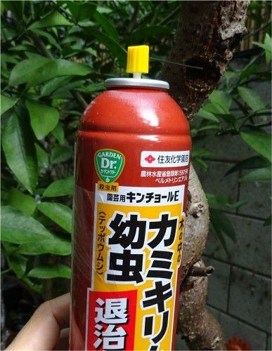 キウイフルーツのスーパーエメラルドの木にカミキリムシの幼虫が