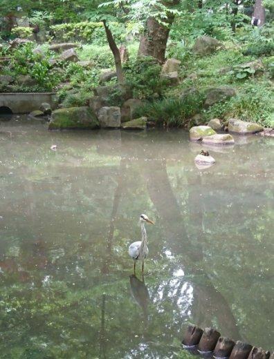 林試の森公園の池に野鳥がいました