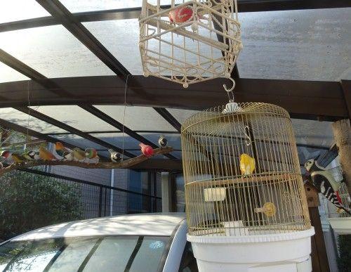 飼い鳥のカナリアと沢山のバードカービング作品
