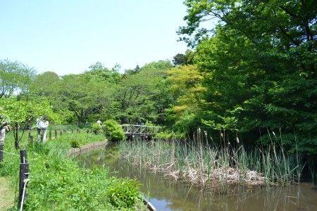 目黒の附属自然教育園