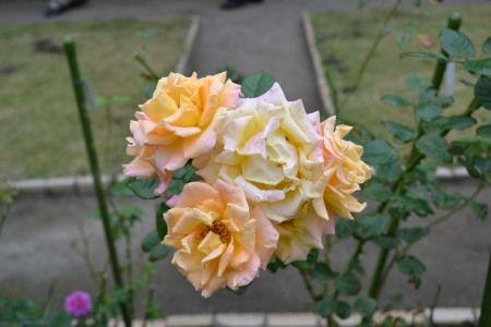 鎌倉 旧華頂宮邸 秋の施設公開 庭園