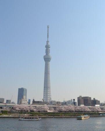 隅田川の桜祭り スカイツリー