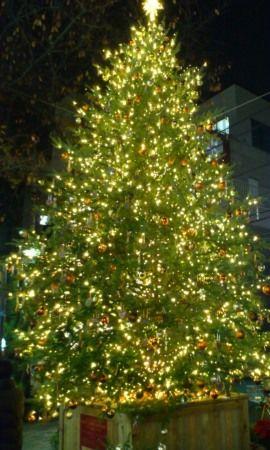 自由が丘南口 クリスマスツリー