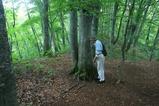 ミニ白神 ブナの樹に聴診器