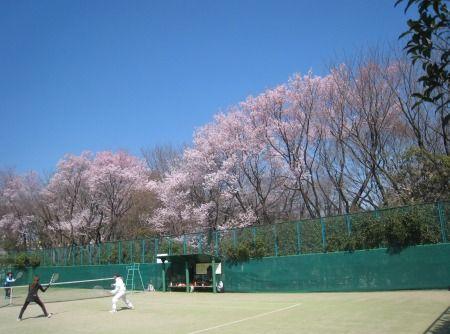 駒場野公園の桜