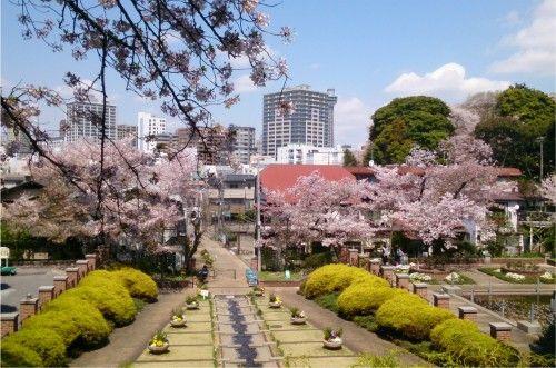 元町から、元町公園、外人墓地あたりの桜がきれいでした