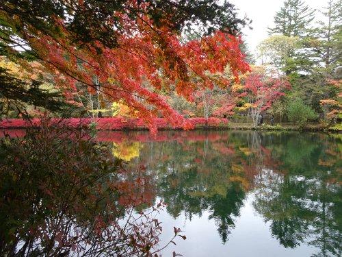 軽井沢の雲場池の紅葉がきれいでした。
