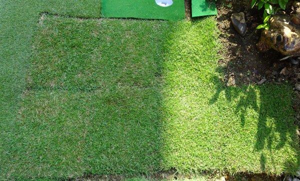 庭に姫高麗芝を植えてアプローチ練習。そのお陰か100を切ることができました。
