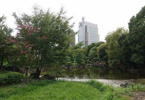 本所吾妻橋駅から、隅田公園、牛島神社経由で向島へ 隅田公園でカワセミがダイブしていました
