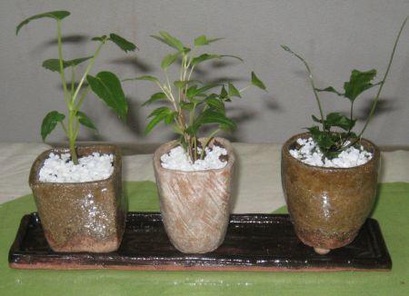 ミニ盆栽の植木鉢とお皿