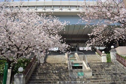 桜橋デッキスクエアに上がる階段