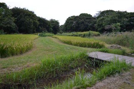 大井の東京港野鳥公園の田んぼ