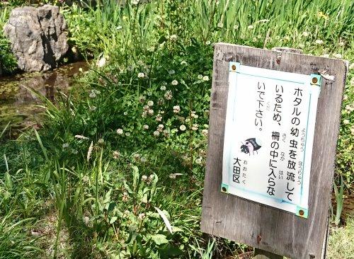 洗足池を散歩