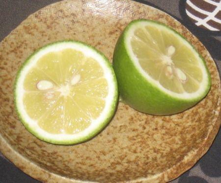 ベランダで鉢植えで育てているレモンの実を収穫